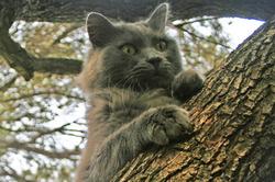 gatto-anto